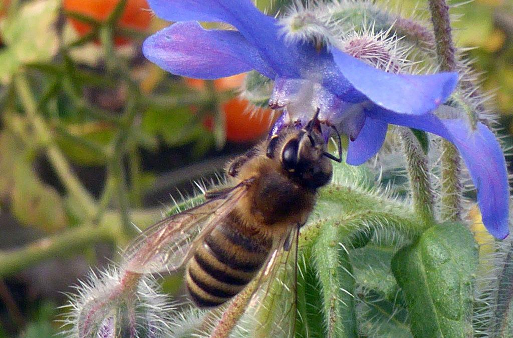 Bienenlehrpfad als außerschulischer Lernort und Wanderziel